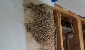 Mold Growth Due To Wall Leak