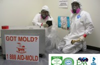 mold remidiation